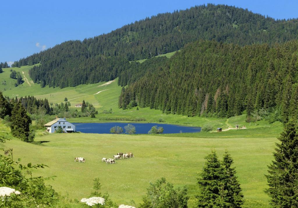 Monts Jura en été