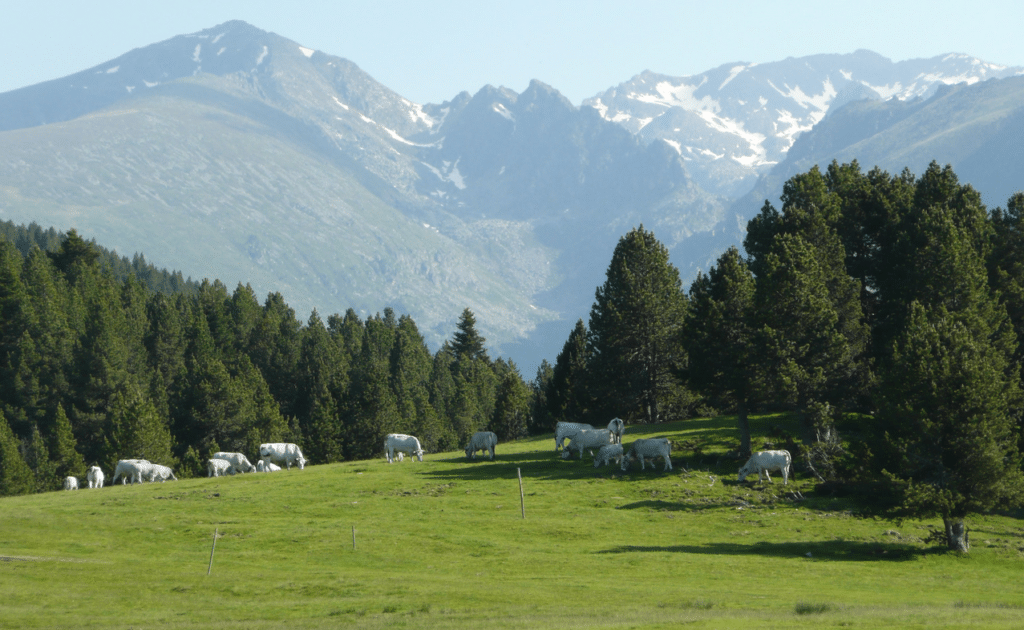 Plateau de Beille en été